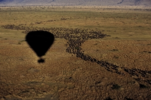 The Great Migration in de Masai Mara vanuit een ballon